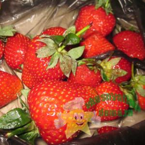 как заморозить ягоды фрукты на зиму